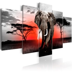 Canvas Print  Lonely Elephant