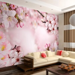 Wallpaper  Spring Cherry Blossom