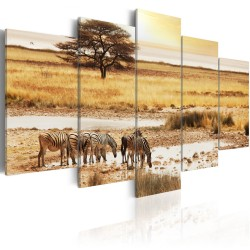 Canvas Print  Zebras on a savannah