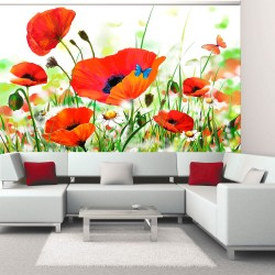 Wallpaper  Country poppies