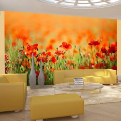 Wallpaper  Poppies in shiny summer day