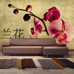 Wallpaper  Japanese orchid