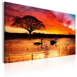 Canvas Print  Swan Lake