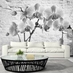 Wallpaper  Orchid in Shades of Gray