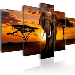 Canvas Print  The Savannah King