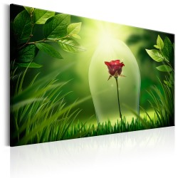 Canvas Print  Magical Rose