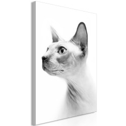 Canvas Print  Hairless Cat (1 Part) Vertical