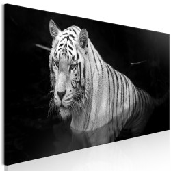 Canvas Print  Shining Tiger (1 Part) Black and White Narrow